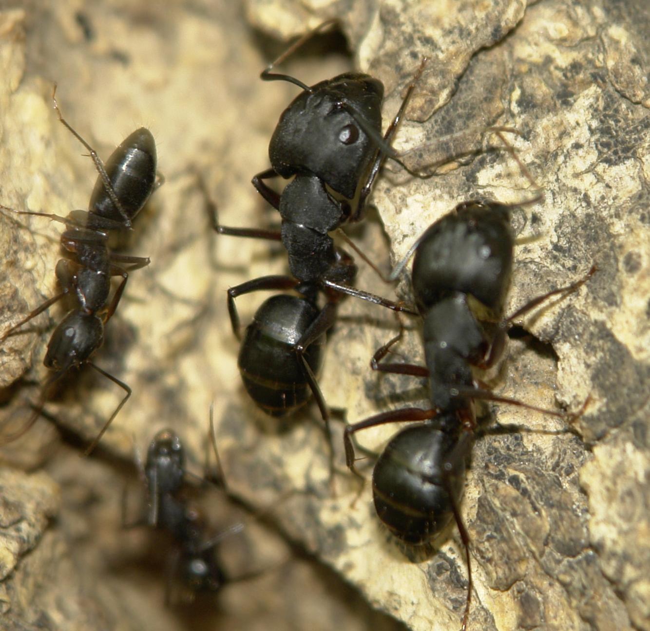Как вывести муравьев из дома народными средствами 55