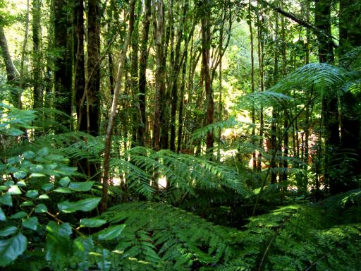 protecting the daintree rainforest essay